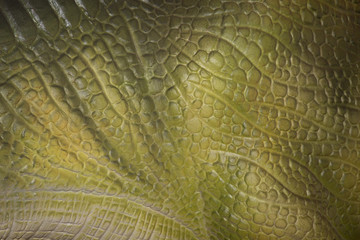Close-up of the skin of an iguana or a large reptile or lizard to use as a background
