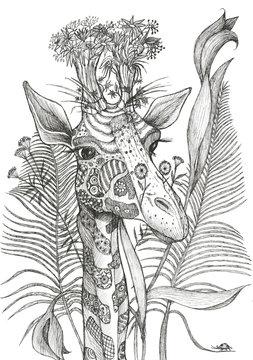 Giraffe,  ink drawing