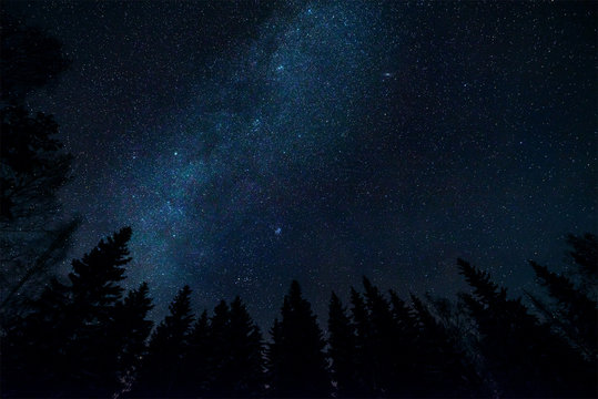 Milky way and tree tops in starry night sky landscape