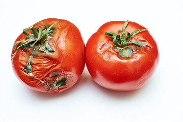 spoiled tomatoes with green tails on an isolated background