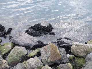 detail of coastline with rock and mussels