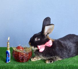 Black rabbit with a pink bow lying on green grass near the basket with Easter eggs and burning candles