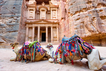 Camels lying in front of El-Khazneh in the ancient city of Petra