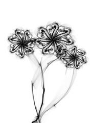 floral style textured line flower monochrome ornament background, beautiful flower set texture backdrop