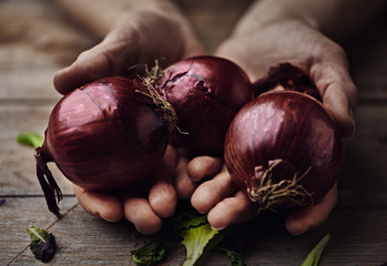 Macro shot of red onion in human hands. Gardening and harvest concept.