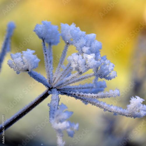 Plante givr e jardin en hiver immagini e fotografie for Plante en hiver