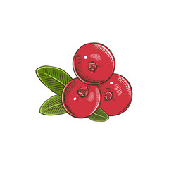 Cranberry in vintage style