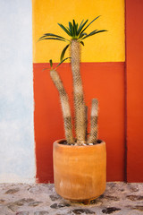 A cactus against a colorful wall