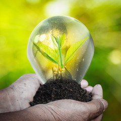 Fresh green small plant in light bulb with blurred green nature and bokeh background