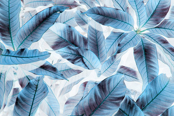 Blue leaf pattern on the surface on white