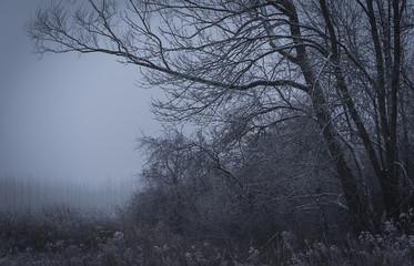 Winter scene in the park