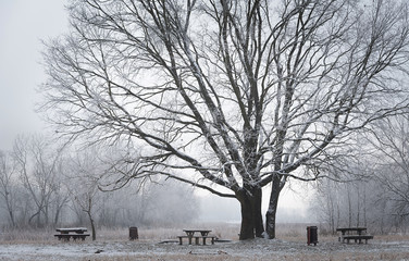 Winter scene in the park