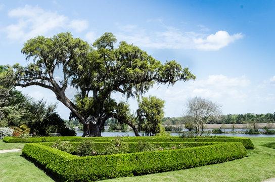Magnolia Plantation 1