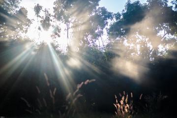 The spectacular natural light leaf