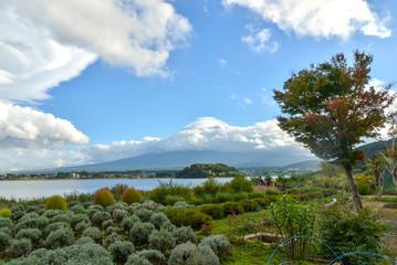 Lavender farm in Oishi Park, Lake Kawaguchiko, Yamanashi, Japan