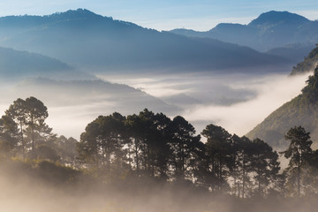 Greenery scene view of mountain forests in morning sunrise