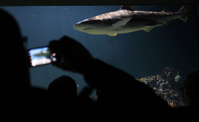 Taking a picture of a shark in an aquarium