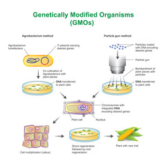 genetically modified organism 4 essay Genetically modified organism say no to gmo what is gmo disadvantages of gmo environmental impacts used to enhance a more common food crop, such as corn, it might introduce a similar allergen which could have a  genetically modified organism essay  genetically modified.