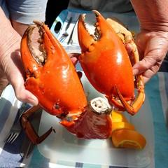 Seafood. Large Mud Crab Nippers.