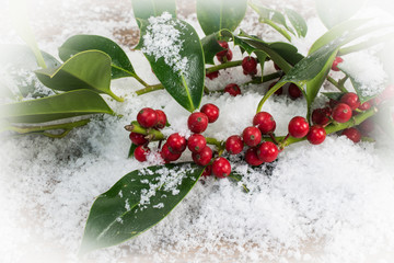Christmas concept: Holly twigs with red berries in the snow.
