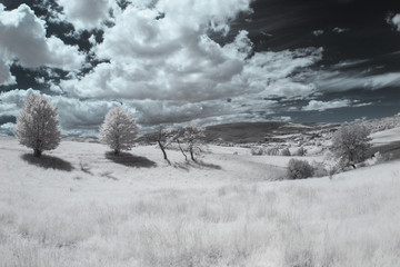 Infrared landscape and details