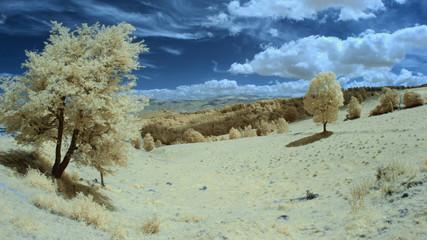 Infrared landscape and details