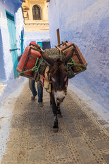 Africa, Morocco, Chefchaouen or Chaouen  is the chief town of the province of the same name. Water is carried, traditionally through the city by animals.