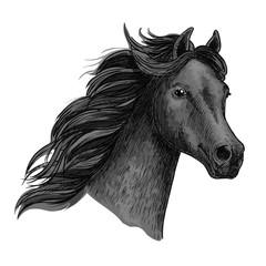 Portrait of beautiful purebred raven horse