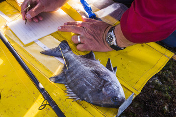 Fish tagging monitoring project