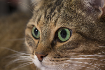 Close up portrait of green-eyed cat