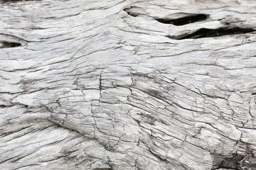 Fototapeta Gray driftwood closeup obraz