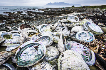 Poached abalone shells line the shoreline of Robben Island with