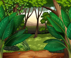 Forest scene with lots of trees