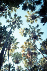 Palm trees on a background sky vintage style