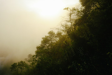 Sunny cloud forest