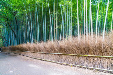 Fotobehang Bamboo Path to bamboo forest at Arashiyama in Kyoto.
