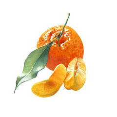 Watercolor illustration of a mandarin orange with green leaf and pieces isolated on white background with clipping path included