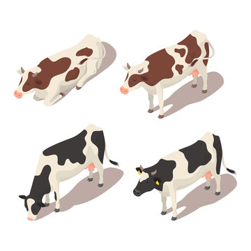 Isometric 3d vector set of cows.