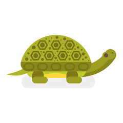 Vector flat style illustration of turtle.