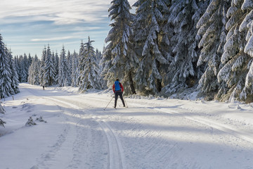 Road in mountains at winter in sunny day with cross-country skier. Trees covered with hoarfrost illuminated by the sun. Groomed ski trails for cross-country in Karkonosze, Giant Mountains, Poland