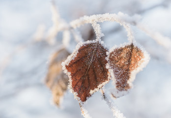 Frozen tree branch with leaves covered ice crystals.