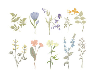 Vintage Wildflowers. Botanical herbs.