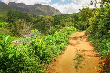 Jungle path in Masoala park