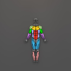 3D rendering of human muscles group