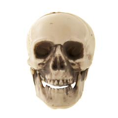 Human skull isolated over white background