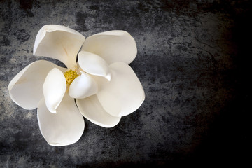 Magnolia Flower on Dark Slate Top View