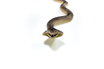 snake plasatic on white background