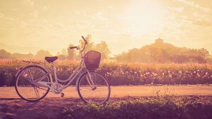 Vintage Bicycle with Summer grass field at sunset