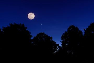 moon and sadow trees