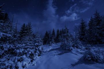 Night Landscape in Winter Forest